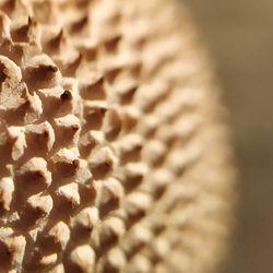 Pūpēži (Lycoperdaceae)