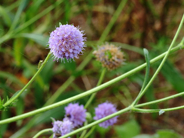 Vilkmēle pļavas